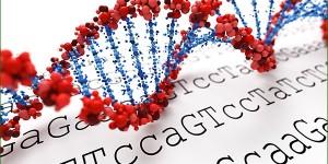 L'influence des mots et fréquences sur l'ADN