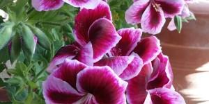 M. le Vent et Mme la Plante, un bel exemple. Ou comment résister à plus fort que soi dans l'Amour ..