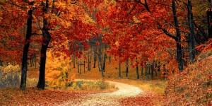 Le Poumon, organe de l'automne : on récapitule !
