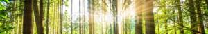 Les bains de forêt : le Shirin Yoku