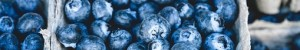 La myrtille ou bleuet, ses vertus