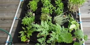 La botte secrète des herbes aromatiques