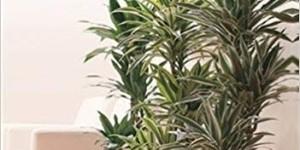 Des plantes pour dépolluer votre intérieur