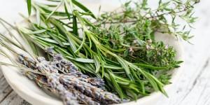 Pour faire du bien à votre intérieur et à vous même…Diffuser des huiles essentielles bio