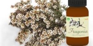 L'huile essentielle de Fragonia