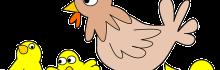 Un communiqué de l'association Food Watch : des poulets gorgés d'eau…