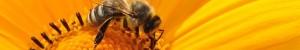 La propolis lutte contre les virus et la contamination par l'herpès