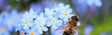 Le miel d'abeille pour soigner  les problèmes de peau