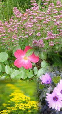 fleursgauche
