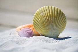 shells-792912__180
